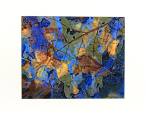 Picture of Floating Leaves
