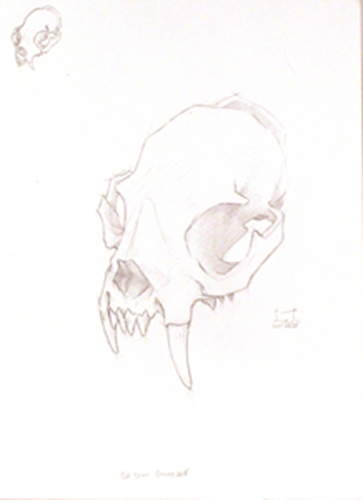 Picture of Cat Skull Study